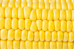 Macro shot of ripe corn grains Royalty Free Stock Photos