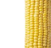 Macro shot of ripe corn grains Royalty Free Stock Image