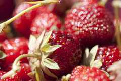 Macro Shot On Ripe Strawberries. Details of strawberries with leaves and seeds Royalty Free Stock Image