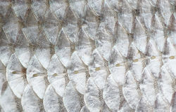 Macro shot of roach fish skin Royalty Free Stock Photography