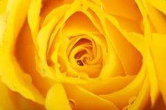 Macro shot on rose's petals. Stock Images