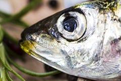 Macro shot of a sardine head Royalty Free Stock Image