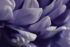 Macro shot small flower. Background wallpaper, flowers closeup. abstraction Royalty Free Stock Photos