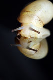 Macro shot of snail Stock Image