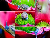 Macro shot of a snail on an colorful exotic plant Royalty Free Stock Photos