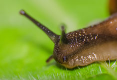 Macro shot of snail Stock Photo