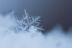 Macro Shot of Snow Flake stock photo