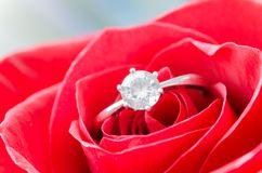 Macro Shot of Solitaire Ring on Flower royalty free stock photography