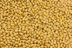 Macro shot of soybeans Royalty Free Stock Photo