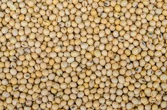 Macro shot of soybeans fills the frame Royalty Free Stock Photos