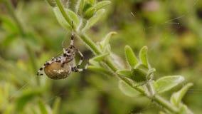 Macro shot of  spider Royalty Free Stock Photo