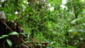 Macro shot of a Spider. A macro shot of a spider stock footage