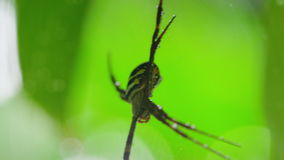 Macro shot of spider. A macro shot of a spider on web while camera slowly moves around stock video footage