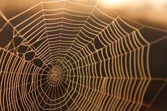 Macro Shot of a Spider Web in the Sunshine Background Texture Stock Images