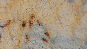 Macro shot of spinifex termites on cathedral termite mound