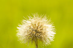 A macro shot of a spiny flower on a sunny day royalty free stock photo