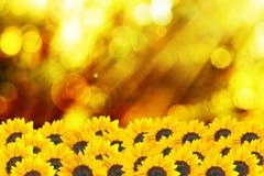 Macro shot of sunflower on summer day Stock Photos