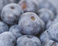 Macro shot of a tasty blueberries Royalty Free Stock Photography