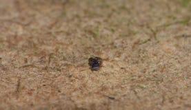 Macro Shot of Tiny Blue Snail. Close up shot of tiny young snail in the garden royalty free stock photos