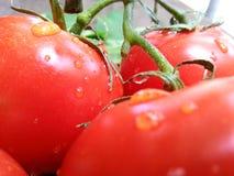 A macro shot of tomatoes Royalty Free Stock Photos