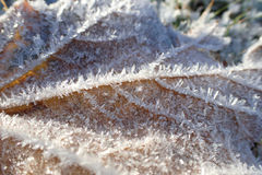 Macro shot of tree leaf with hoar frost, placed on frosty grass. Royalty Free Stock Image