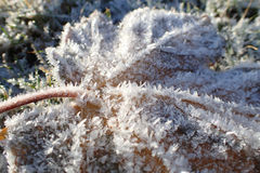 Macro shot of tree leaf with hoar frost, placed on frosty grass. Royalty Free Stock Photography