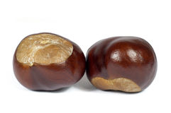 Macro Shot of Two Chestnut Isolated on White Royalty Free Stock Photos