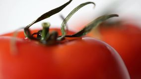 Macro shot two fresh tomatoes on white backround. Two red tomatoes isolated on white background stock video footage