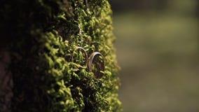 Macro shot of two golden wedding rings on the thick green moss. The macro shot of two golden wedding rings on the thick green moss stock footage