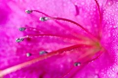 Macro shot of  flower Stock Images