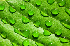 Macro shot of water drops on leaf Stock Photo