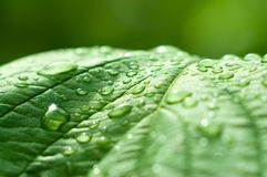 A macro shot of wet leaf Stock Photography