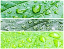 A macro shot of wet leaves Royalty Free Stock Photography