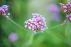Macro Shot of White Flower stock image