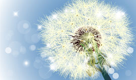 Macro shot of wild dandelion in sky and bokeh Royalty Free Stock Photos