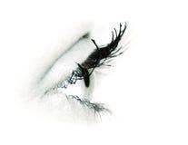 Macro shot of woman eye stock photography