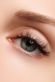 Macro shot of woman's beautiful eye with extremely long eyelashes. Sexy view, sensual look. Female eye with long eyelashes Royalty Free Stock Image