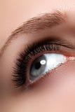 Macro shot of woman's beautiful eye with extremely long eyelashes. Sexy view, sensual look. Female eye with long eyelashes Royalty Free Stock Photo