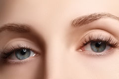 Macro shot of woman's beautiful eye with extremely long eyelashes. Sexy view, sensual look. Female eye with long eyelashes Royalty Free Stock Images