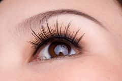 Macro shot of a woman's eye. Close up picture of a brown eyed woman royalty free stock photo