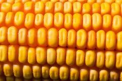 Macro shot of yellow corn kernels Stock Image