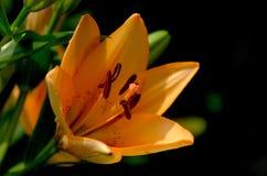 Macro Shot of Yellow Flowers stock photography
