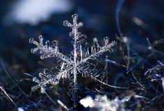 Macro simmetria del primo piano del fiocco di neve congelata Immagini Stock Libere da Diritti