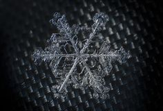 Macro simmetria del primo piano del fiocco di neve congelata Immagine Stock