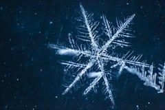Macro simmetria del primo piano del fiocco di neve congelata Fotografie Stock Libere da Diritti