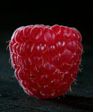 Macro of a single raspberry Stock Photos