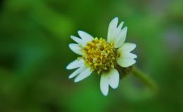 Macro of a small flower. Which is yellow in color stock image