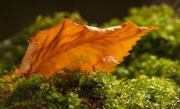 Leaf covert Royalty Free Stock Images