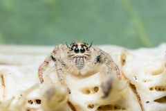 Macro small spider. A small spider on a leaf Royalty Free Stock Photos