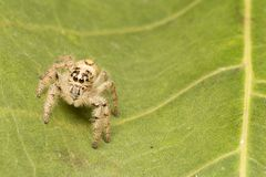 Macro small spider. A small spider on a leaf Royalty Free Stock Images